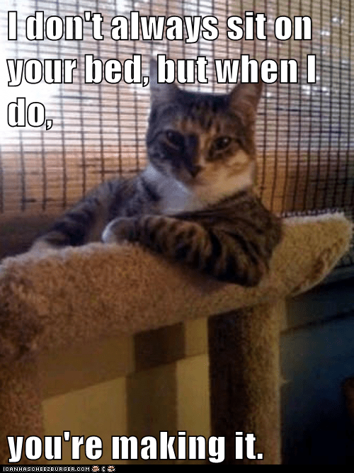 annoying beds Hall of Fame making the bed Memes sit the most interesting cat in the world the most interesting man in the world - 6073523200