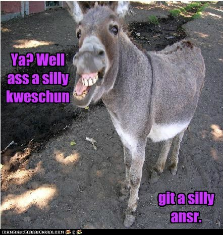answer ask ass derp donkey idiom puns question silly - 6073851904
