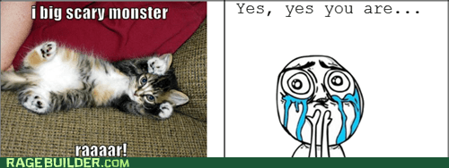 cat,cute,cuteness overload,Rage Comics