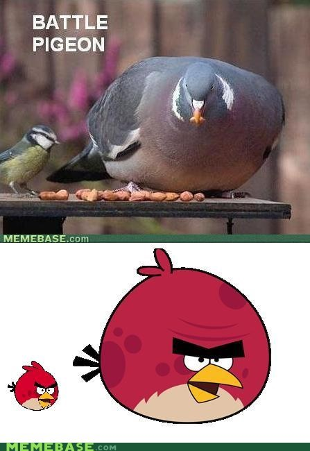 angry birds,Battle,Memes,pigeon,Reframe