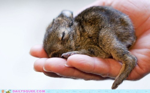 bunny hand happy bunday tiny - 6074410752
