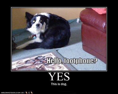 dogs this is dog what breed - 6074510080