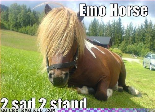 emolulz horse riding Sad - 6074716160