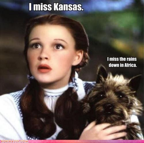 funny Judy Garland Movie the wizard of oz - 6074743808