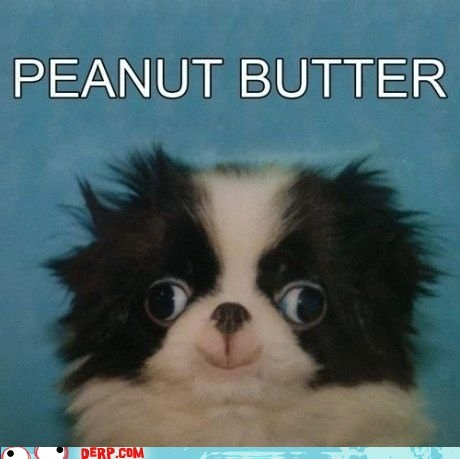 best of week derp goggie peanut butter jelly time so good - 6075043840