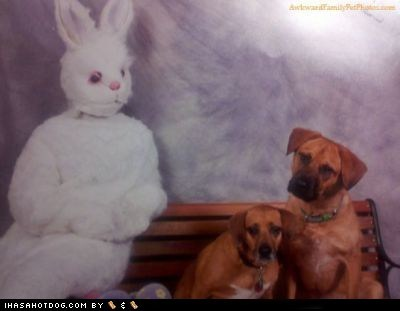 dogs,Easter Bunny,sketchy bunny