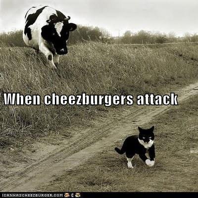 Cheezburger Image 6075097344