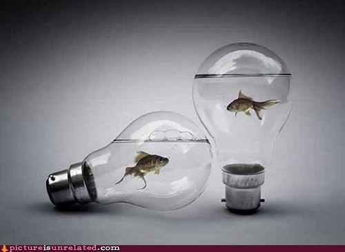 fish idea lightbulb wtf