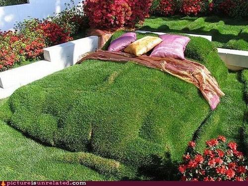 bed garden wtf yard - 6075239680
