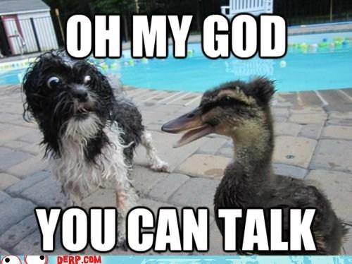 derp,duck,goggie,omg