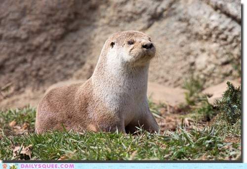 grass,grumpy,river otter,sleepy,squee spree