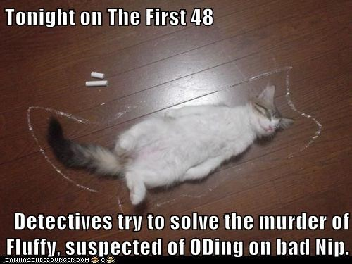 cat,catnip,Cats,chalk outline,dead,ded,drugs,killed,lolcat,murder,murdered,nip,OD,outline,television