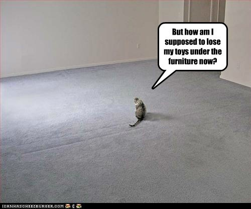 alone carpet cat empty furniture lolcat room - 6075604224