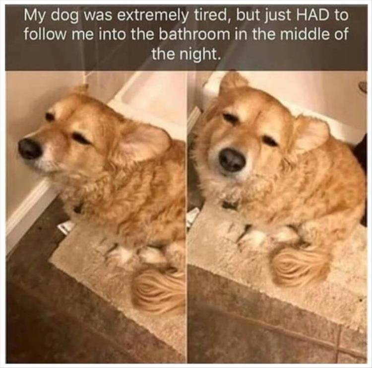 dogs dog memes funny memes Memes - 6075653