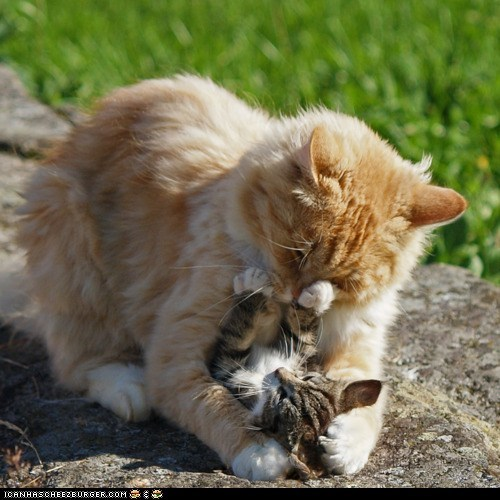 Cats,cyoot kitteh of teh day,do not want,family,hugging,hugs,moms