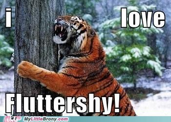 animal brony fluttershy meme tiger tree - 6076046848