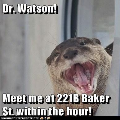 benedict cumberbatch meet me otter sherlock holmes Watson - 6076442112