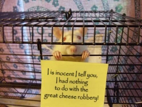 I is innocent