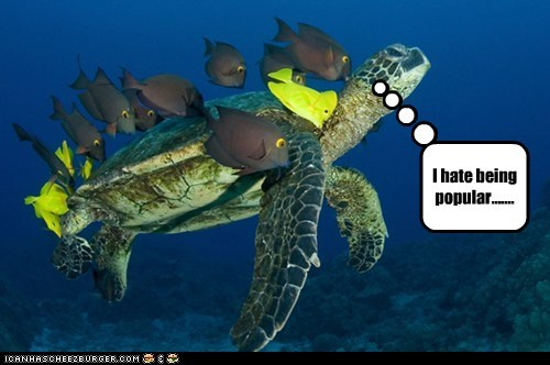 annoyed fish hate popularity swimming turtle - 6076679168