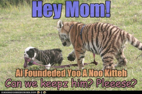 big cats,can i keep him,dogs,dumb,found,kitteh,mom,please,tiger,tigers
