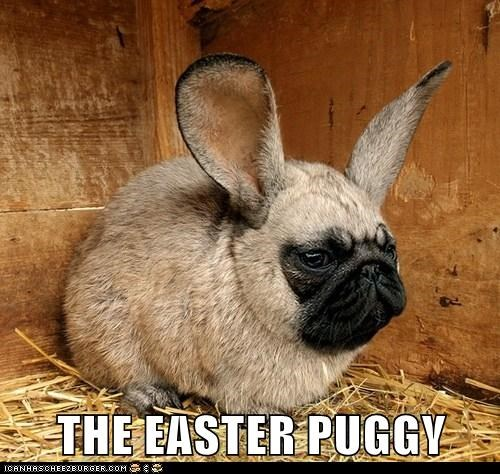 best of the week bunnies bunny dogs ears easter Hall of Fame photoshopped pug pugs rabbits - 6077131008