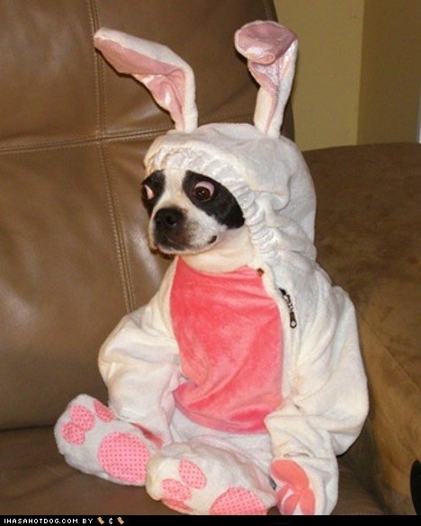 bunny costume dogs easter - 6078319360