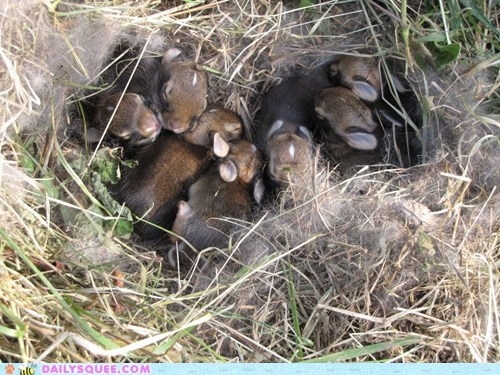 Babies Bunday bunnies fluff grass nest tiny - 6078576128