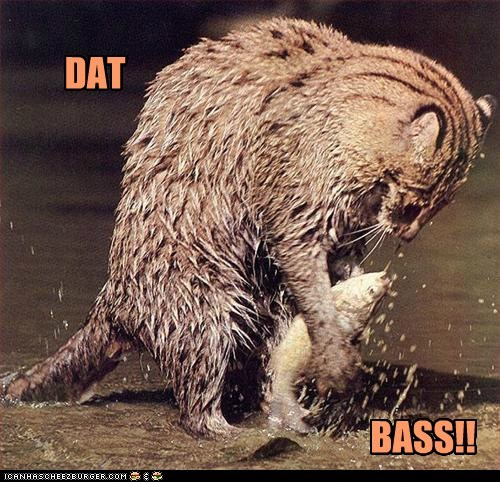 bass,cat,catching fish,dat ass,fishing,pun