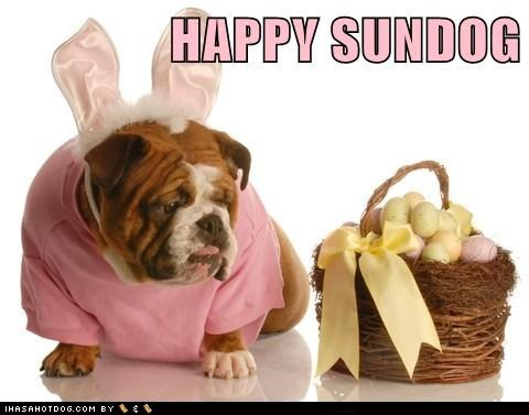 bulldog dogs easter Sundog - 6078694656
