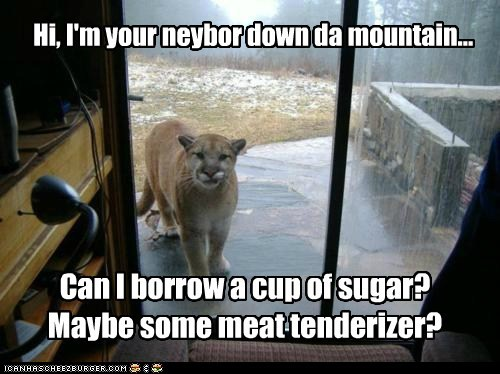 borrow,cup of sugar,dinner,eating,meat tenderizer,mountain lion,neighbor,scary