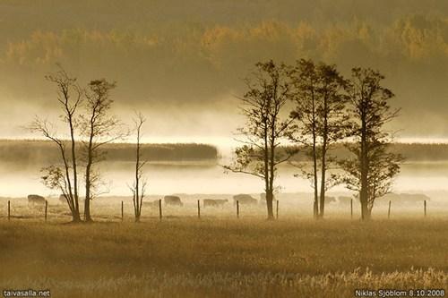 Finland,mist,valley