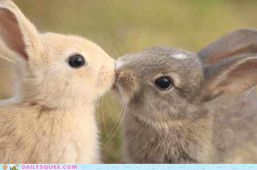 Bunday bunnies face KISS kissing rabbits squee - 6079124480
