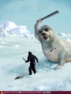 baby best of week clubbing revenge seal wtf - 6079156480
