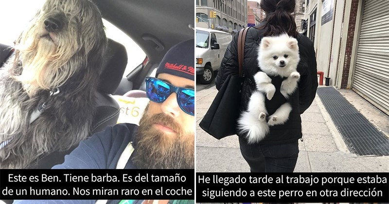 snapchats mascotas