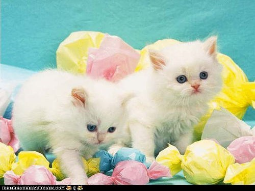 Cats cyoot kitteh of teh day easter holidays pastels - 6079755264