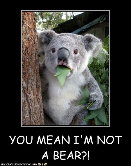 YOU MEAN I'M NOT A BEAR?!