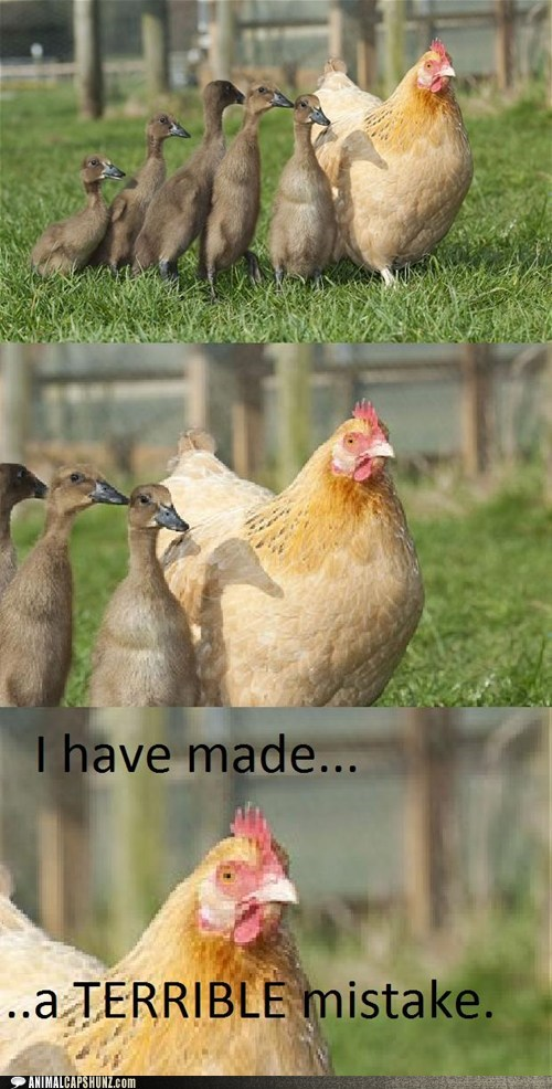 Awkward,birds,chicken,chickens,children,ducklings,kids,mistake,multipanel,that awkward moment,wrong