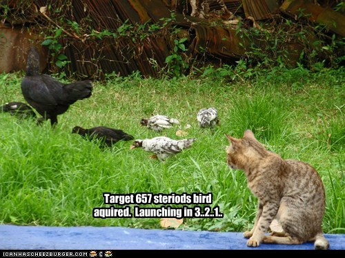 Target 657 steriods bird aquired. Launching in 3..2..1..