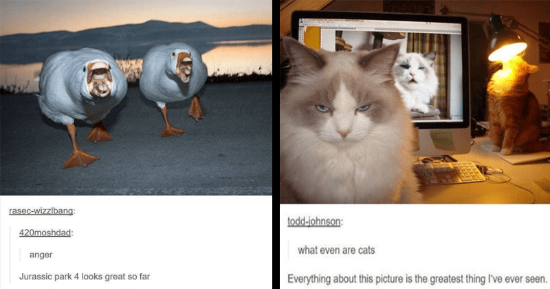 Funny animal posts on tumblr