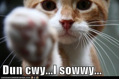 apologize cat cry lolcat Sad sorry sweet - 6081266176