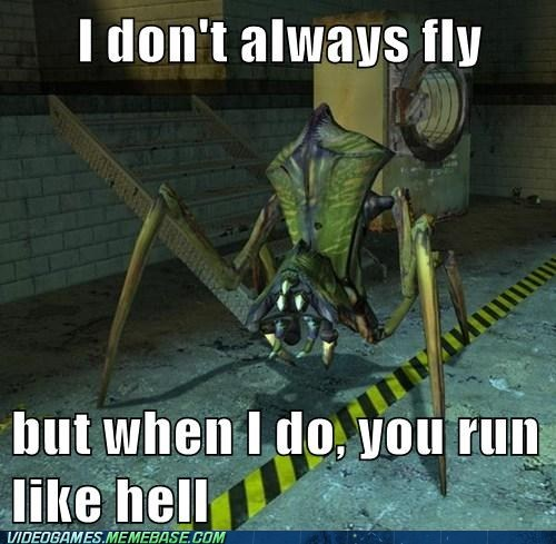 antlion,flying,half life,meme,pheropod,run,the most interesting man in the world