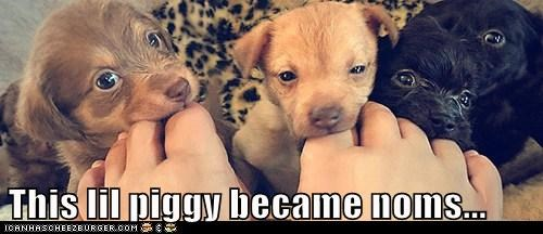 piggy puppies toes what breed - 6081850624