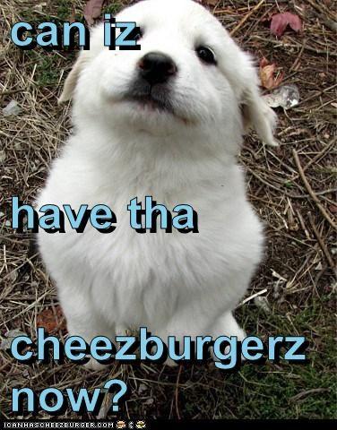 Cheezburger Image 6081933056