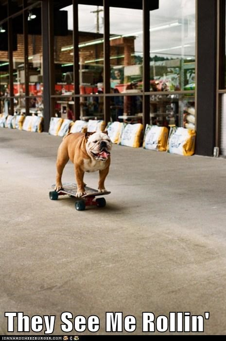 bulldog dogs skate boarding - 6082178816