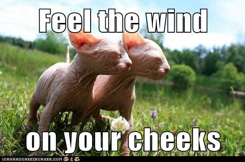 Feel the wind  on your cheeks