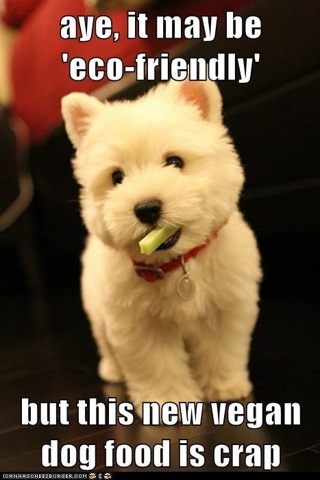 celery dogs terrier vegan westie - 6082707456