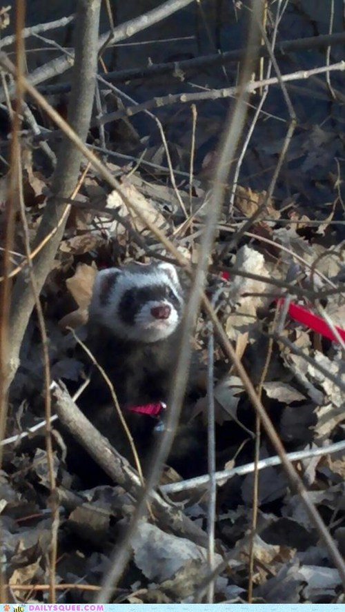 ferret kitty leaves pet reader squees river walk woods