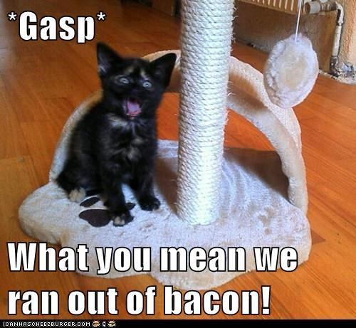 bacon cat eat famished food Hall of Fame hungry lolcat nom starving - 6083989760