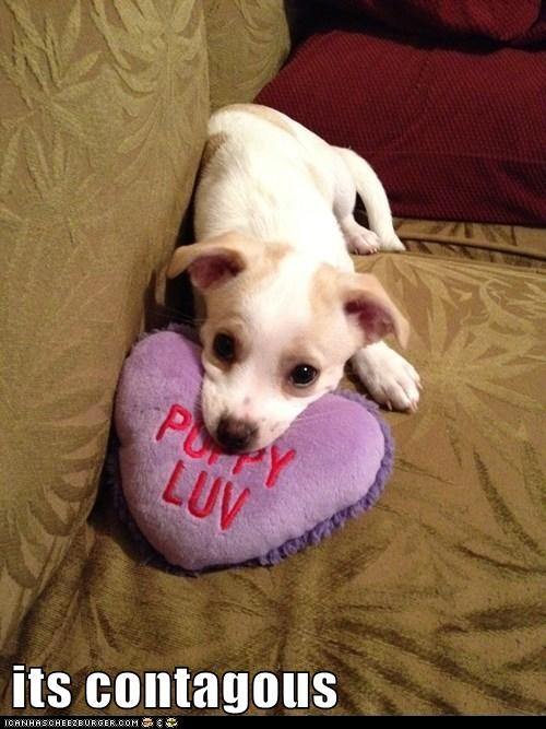 love Pillow puppy - 6084232960