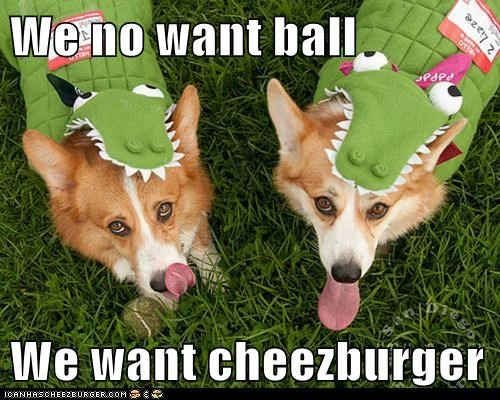 Cheezburger Image 6085105664